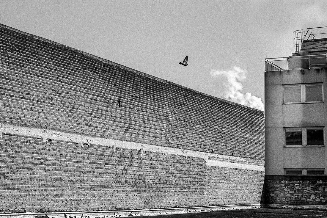 blogivry-oiseau-mur
